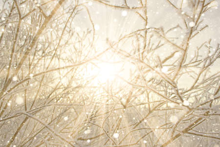 The pattern of the branches of trees covered with frost. Yellow, golden sunset, the dawn light. Sunny rays flare. Texture winter background. Copy space.