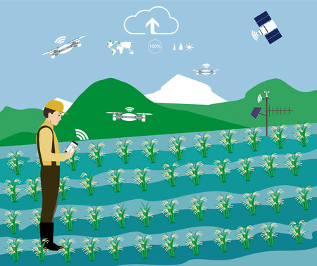 Man controls the process of growing rice in the field. Technology in agriculture, vector illustration. Illustration