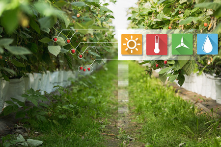Greenhouse with information symbols. Internet of things in agriculture technology and smart farming concept. Stock Photo