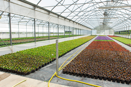 Modern greenhouses for growing flowers. Floriculture industry 写真素材