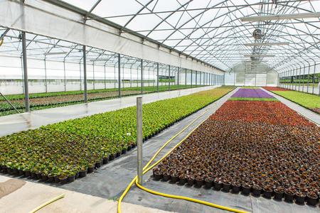 Modern greenhouses for growing flowers. Floriculture industry 版權商用圖片