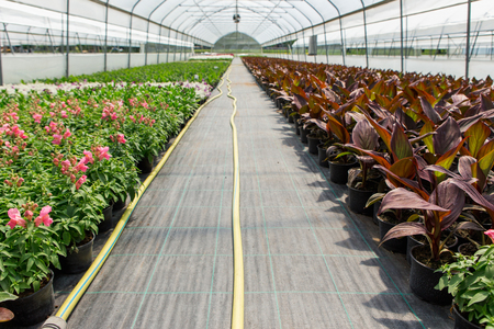 Greenhouse with microclimate control. Smart agriculture and farming