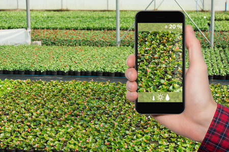 Hand with phone on a background of greenhouse. On the screen condition  measurement tools. Internet of things in agriculture and smart farming Banco de Imagens