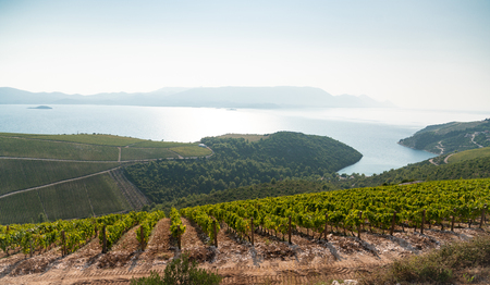 Vineyard on the mountain. Wine making industry Stock Photo