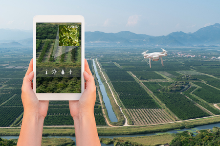 A farmer manages drone with a tablet. Smart farming and agriculture Banco de Imagens