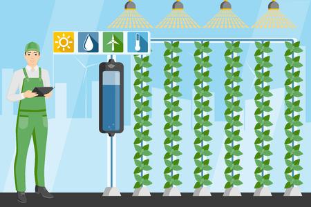 Agricultor con tableta digital en invernadero con jardines verticales. Granja inteligente con control inalámbrico. Ilustración vectorial. Ilustración de vector