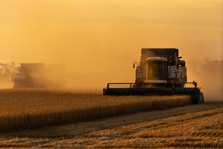 Combine harvester harvests wheat at sunset. Agricultural machinery Stockfoto