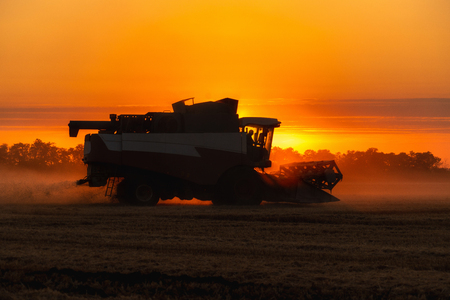 Combine harvester harvests wheat in the field at sunset.