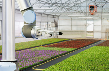 The robot arm is working in a greenhouse. Smart farming and digital agriculture