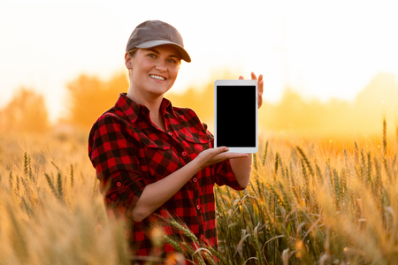 A woman farmer is holding a tablet with blank screen on the background of a wheat field.