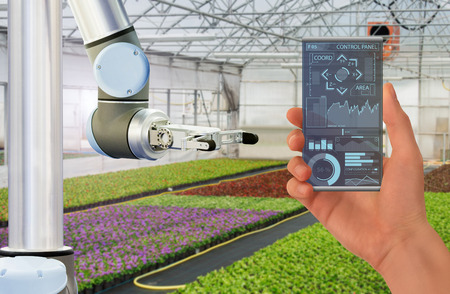 Farmer uses a futuristic transparent smartphone to control robot in a modern greenhouse. Smart farming concept.