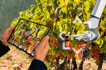 Farmer uses a digital tablet to control robot on a vineyard. Smart farming concept.