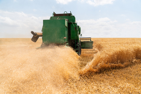 Combine harvester harvests wheat. Agricultural machinery