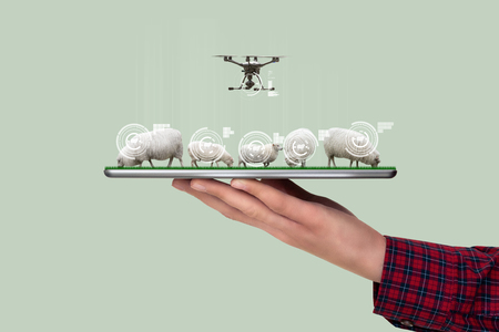 A farmer holds a tablet with a flock of sheep and drone. Smart farming and digital transformation in agriculture Фото со стока - 122108755