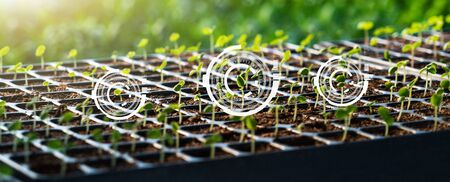 Microgreen. Smart farming and digital agriculture