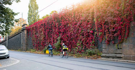 Wall of the house is covered with ivy. Autumn city