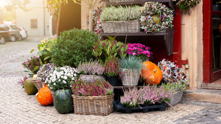 Autumn decoration with pumpkins and flowers at a flower shop on a street in a European city Reklamní fotografie