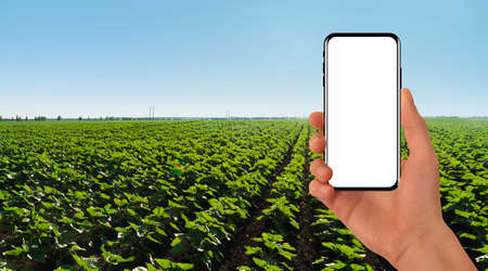 Hand with smartphone on a background of agricultural field. White screen, you can add your content here