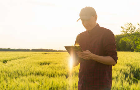 Farmer with digital tablet on a rye field. Smart farming and digital transformation in agriculture. Stockfoto