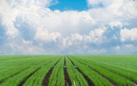 Agricultural field with clouds