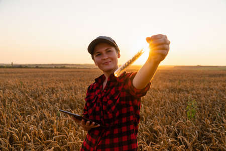 A woman farmer with a digital tablet holds an ear of wheat in a test tube Stock Photo