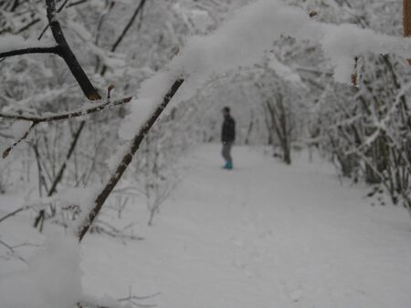 snow-covered branch with a lonely man walking in the background