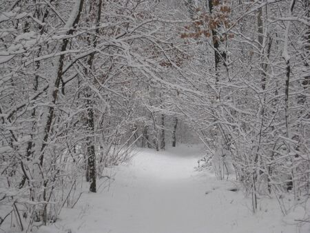 road with branches full of freshly fallen snow