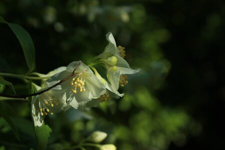 small white flowers illuminated by a ray of sunshine in a perfect fantasy style