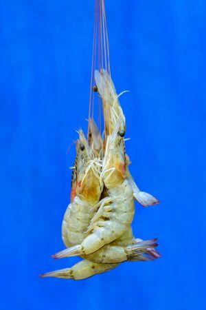 Raw fresh shrimp caught from the ocean, close-up. A few shrimps in a shell are suspended by their whiskers. Chinese new year food.