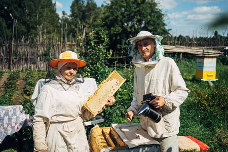 Beekeepers near beehive to ensure health of bee colony or honey harvest. Beekeepers in protective workwear inspecting honeycomb frame at apiary. Two elderly farmers collect organic honey.