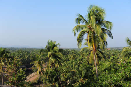 View of palm groves and tropical trees against the blue sky and hills in the distance. Coconut trees over the roofs of houses in India. 版權商用圖片 - 151605555