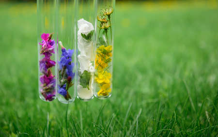 Glass test tubes with different flower petals on green herbal background, close up. Beautiful composition with aromatic samples, copy space. Parfum industry, non-traditional medicine. 版權商用圖片 - 151484887
