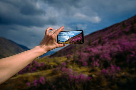 Close-up of smartphone in hand. Unknown woman using a gadget takes photos of a mountain slope covered with pink flowers. Focus on hand and phone. Digital technology and travel.
