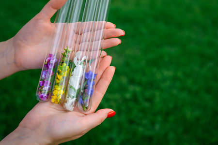 Glass test tubes with multicolor flower petals in women's hands, close up. Process of making perfumes, collecting plants. Image for advertising, cosmetics industry, banner with copy space. 版權商用圖片 - 151484512