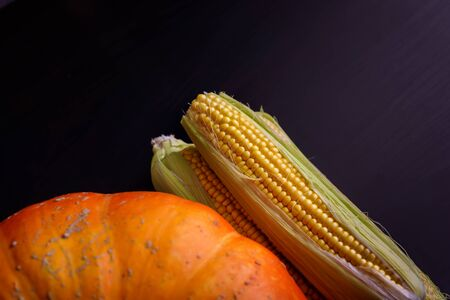 Big orange pumpkin, corn cobs on the black background. Autumnal, raw food concept. Gifts of Autumn. Top view. Backdrop with pumpkin. Copy space.