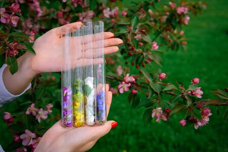 Glass test tubes with multicolor flower petals in women's hands on blooming tree background, close up. Process of collecting plants for perfume industry. Image for advertising with copy space. 版權商用圖片