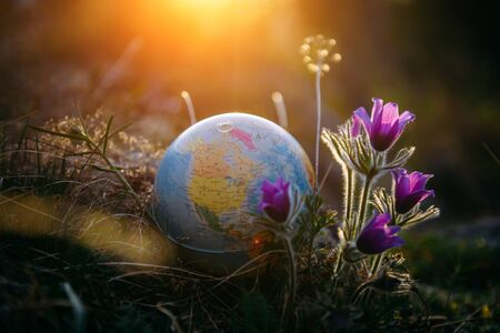 Earth globe in the grass next to a beautiful purple flowers close up. Awakening of the planet and the first spring flowers. Concept - Earth Day.