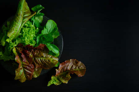 Lettuce and arugula leaves on black wooden table with copy space. Variety of healthy salad greens with water drops, close-up. Organic food, vegetarianism. 版權商用圖片 - 154875826