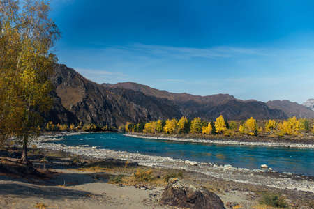 Colorful mountain landscape. River valley on sunny autumn day. Turquoise river on the background of rocks, yellow birch trees, blue sky. Natural backgrounds, images for advertising, photo wallpapers. 版權商用圖片