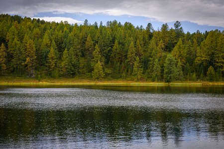 Beautiful landscape of high mountain lake with dense coniferous forest. Trees are reflected in the moving water. National park, Altai reserve, Siberia, Russia. 版權商用圖片 - 154875217