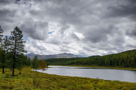 Beautiful view of mountain lake in early autumn in Altai, Siberia. Overcast sky, over ribbed water, banks overgrown with green coniferous trees and mountain peaks in the distance.