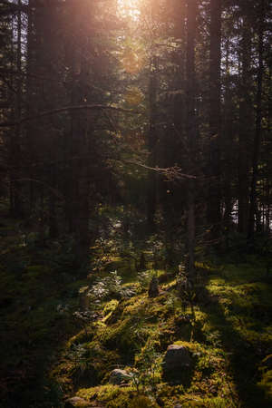 Forest landscape in summer sunny morning. Dense forest with green grass and moss. Picturesque siberian taiga scene.