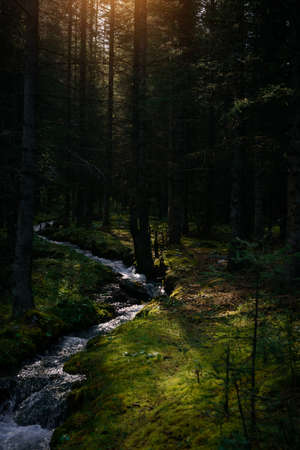 Forest landscape in early sunny morning. Dense forest, small stream, banks overgrown with green grass and moss. Picturesque siberian taiga scene.