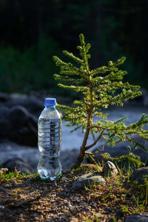 Bottle of clear icy water from mountain stream near a small coniferous tree in the sun rays, blurred background. Image for advertising drinking water.