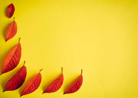 Autumn abstract image of fallen red leaves on yellow paper background. Creative season layout. Copy space.