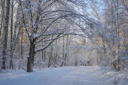Mysterious road in winter forest. Sun's rays break through the snow-covered branches of trees. Concept of winter travel during the new year holidays. 版權商用圖片