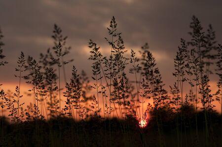 siluet: Sunset Stock Photo