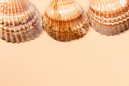 oceanic: Large seashells on a beige background