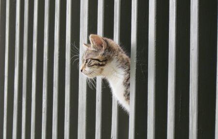 Kitten looking through railing