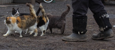 stray cats walking on the street. Ukraine photo